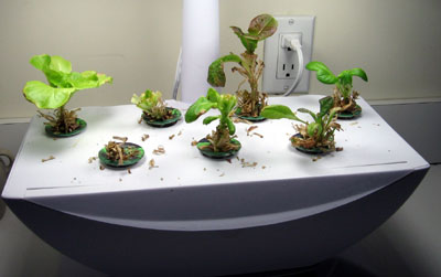 aerogarden reviews 2014