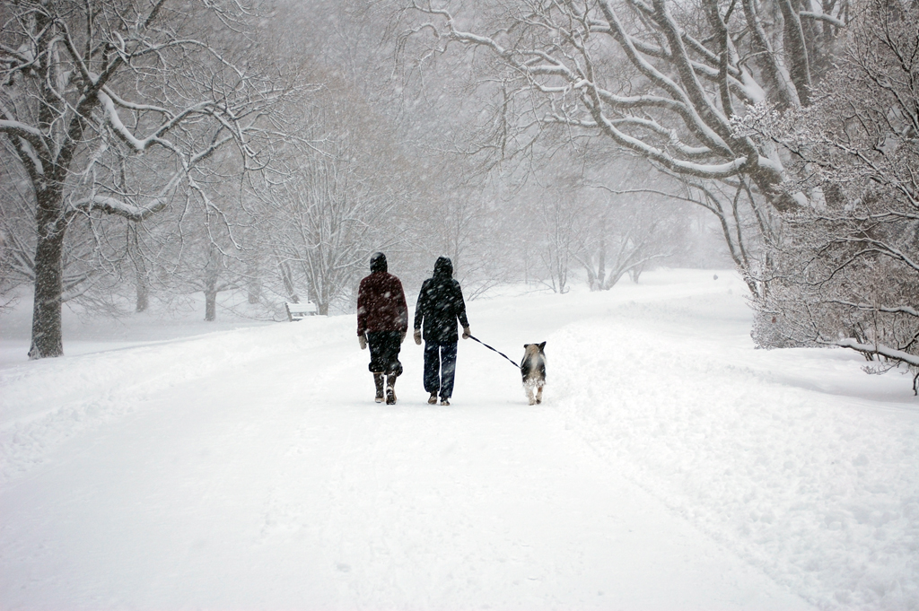 walking in the snow - photo #32