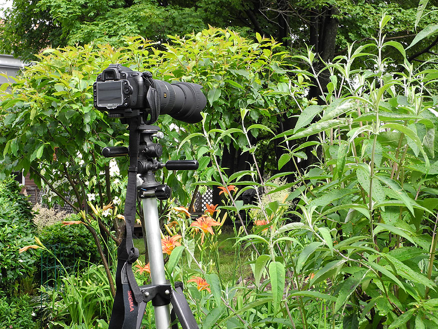 adult bird watching day camps
